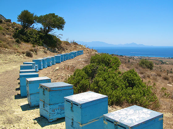 Million dollar view for the greek bees