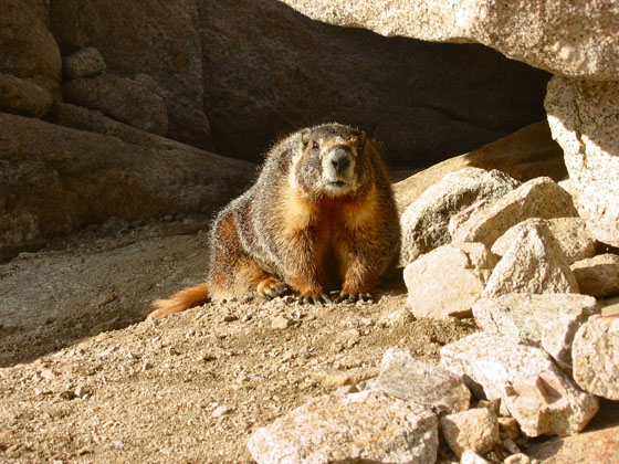 This marmot stayed right next to us during our pause   Far enough to quickly escape if anyone moved any closer